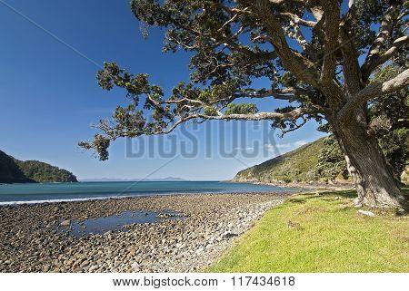 Stony Bay, Coromandel, New Zealand