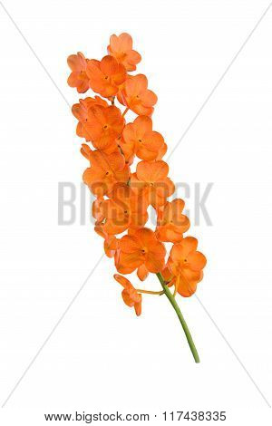 Beautiful orange orchid flower isolated on white.