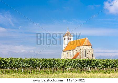 church with vineyard, Kirchenberg, Lower Austria, Austria