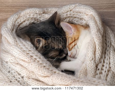 Love and tenderness. Big gray cat and a small cat sleeping together, hugging each other. Cat paw affectionately hugging cat. Cute cats, family poster