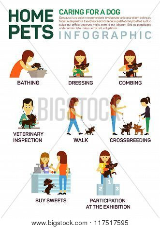 Vector flat illustration infographic of caring about pets dog. Bathing, washing, dressing, combing,