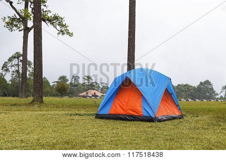 Dome Tents Camping Near Pine Tree On High Mountain With Fog