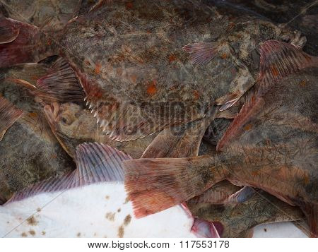 big fishes flounder nature background close up poster