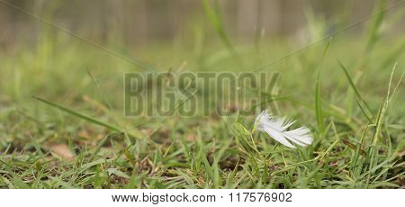 White Downy Feather Blowing In Wind