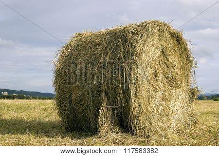Hay rolls in the field in September