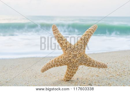 Starfish pon the tropical beach