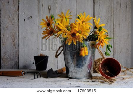 yellow flowers in pot in gardening conceptiongardening tools