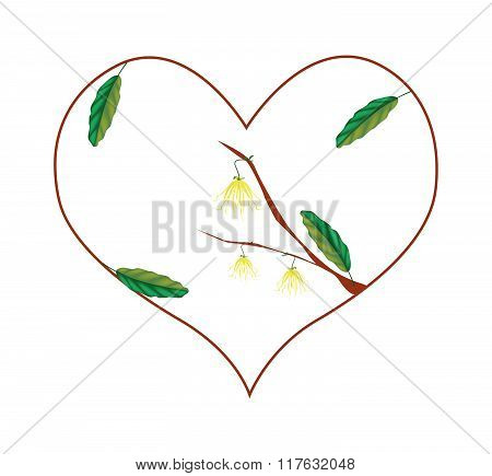 Yellow Ylang Ylang Flowers In A Heart Shape