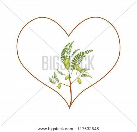 Chick Peas Plant in A Heart Shape Frame