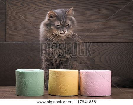 Cat and a lot of colored toilet paper