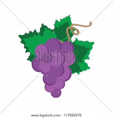 Banche Of Grape
