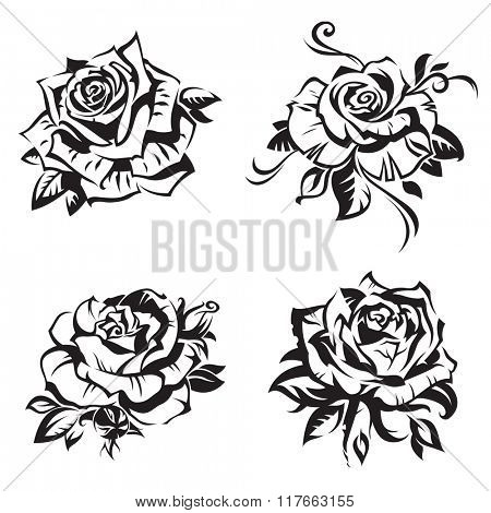 black rose set on white background