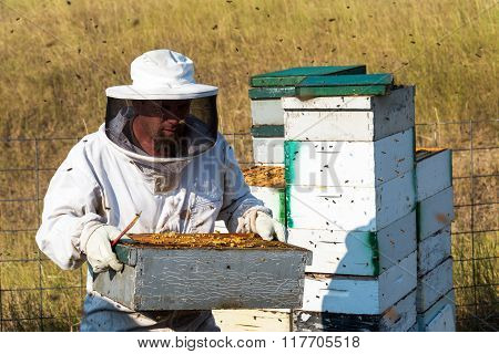 Beekeeper Carrying A Beehive
