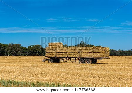Agriculture scene. Farmers trailer loaded with haystacks hay bales on a golden field against Australian rural landscape and blue sky on the background. Copy space.