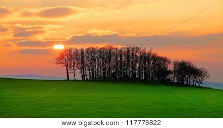 Rest of a forest in agricultural landscape. Silhouettes of trees against beautiful sunset. Early spring scenery in Slavkovsky Les, Czech Republic, Central Europe. Warm filtered picture.