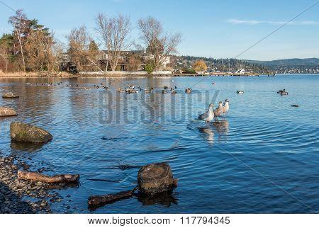 Three Roosting Seagulls 3