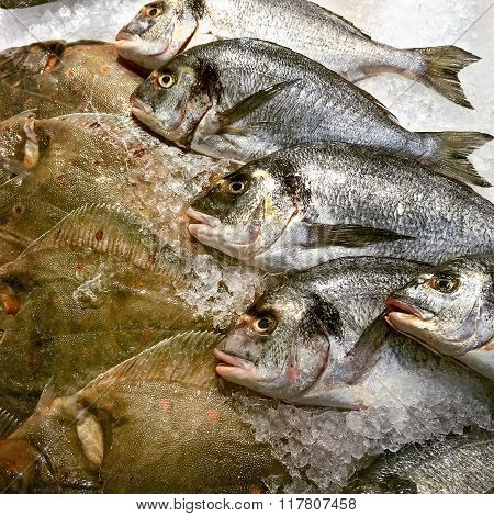 Gilt-head Bream And Turbo Fish At The Market