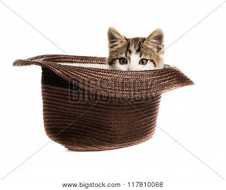 A small kitten peeks out of a hat on a white background