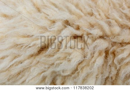 Sheep Fleece For Texture Background