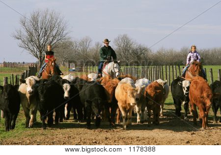 Family Cattle Drive