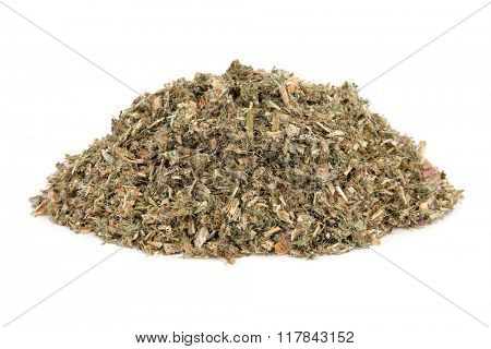 Blessed thistle herb used in natural alternative medicine over white background. Cnicus benedictus.