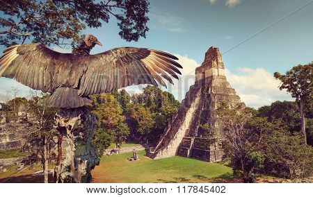 Neophron looking at the ancient ruins of Mayan city