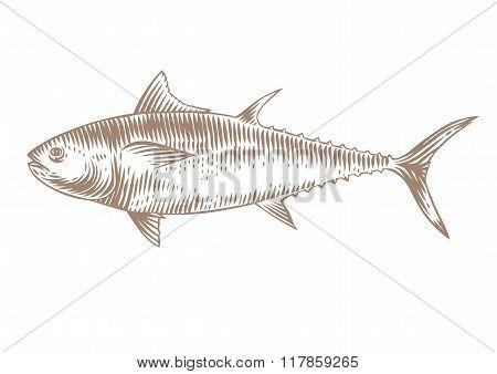 Raw Blue Tuna
