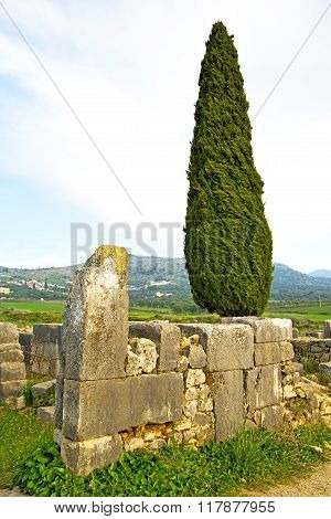 Volubilis In Morocco   Cypress Monument And Site