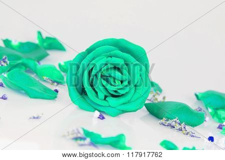Dye Green Rose With Whth Rose Petals