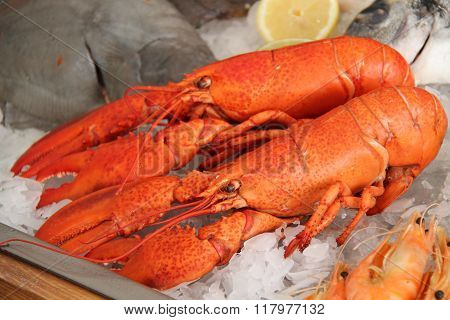 Two Lobsters.