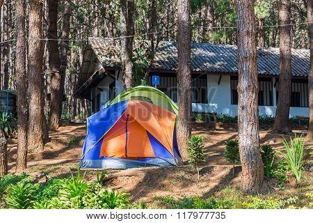 Dome Tents Among Pine Trees