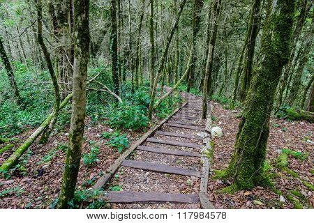 Scenic Trail In A Dense Forest