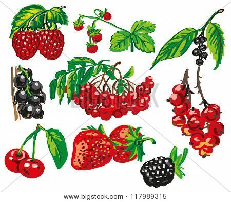 Colored Berries On White Background