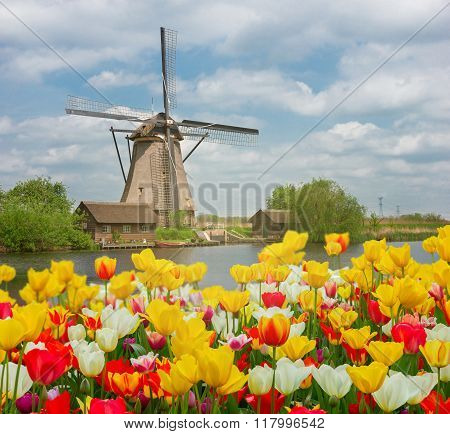 dutch windmill over  tulips field