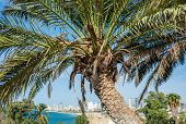 palm in Abrasha park in Jaffa Tel Aviv Israel poster