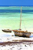 zanzibar beach seaweed in indian ocean tanzania sand isle sky and boat poster