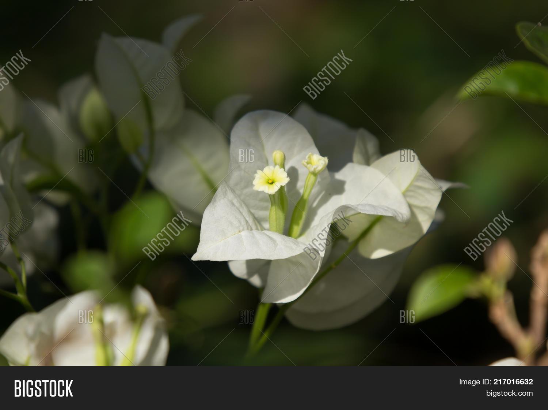 Yellow hibiscus flower black dard image photo bigstock yellow hibiscus flower in black dard background izmirmasajfo
