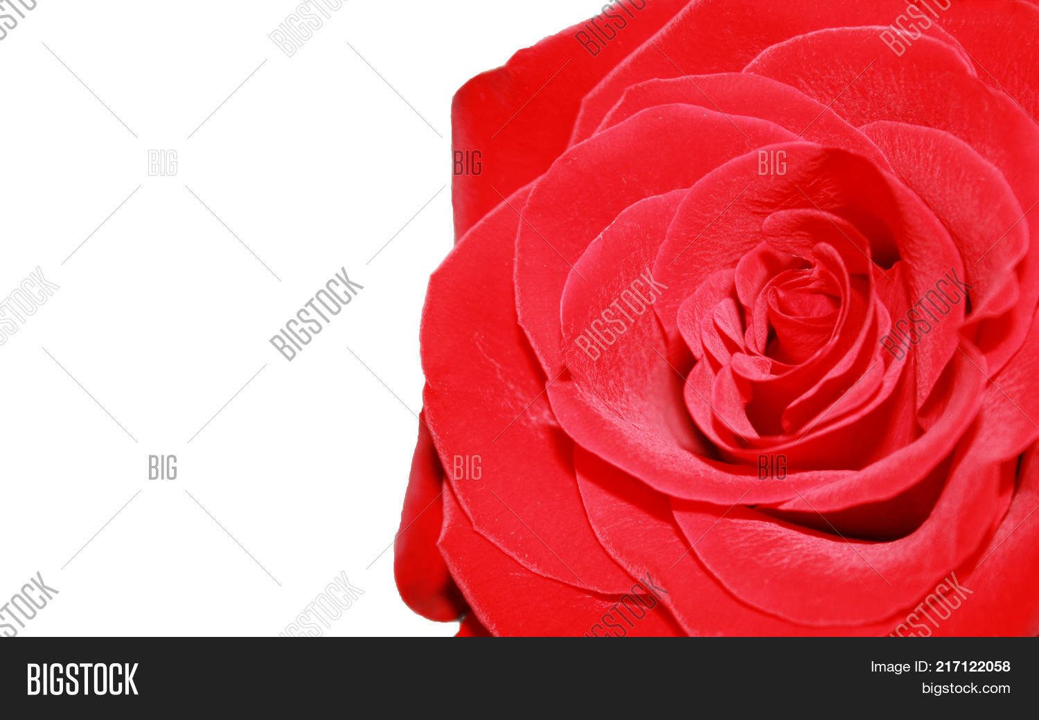 Rose Flower Petals Image & Photo (Free Trial) | Bigstock