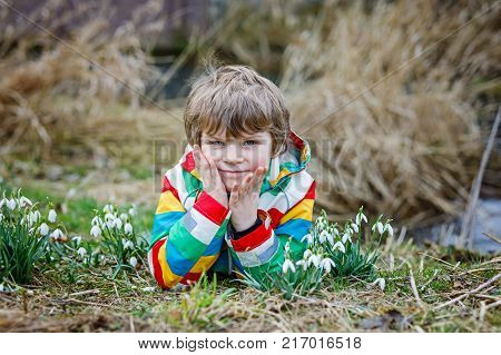 Cute blond preschool kid boy discovering first spring flowers, beautiful snowdrops. Active happy child in colorful clothes on meadow.
