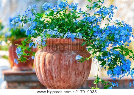 Flowers in flower pot at Augustus Gardens on Capri Island Italy