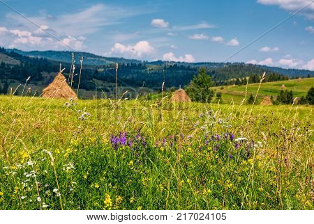 Wild Herbs On A Rural Field In Summer Countryside