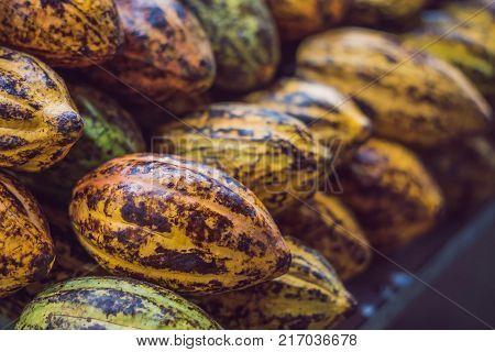 Cacao fruit, raw cacao beans, Cocoa pod