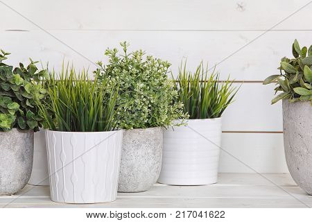 Pot plants in white pots and concrete on a background of white boards