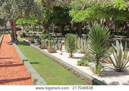 HAIFA ISRAEL - SEPTEMBER 18 2017: The Bahai Gardens include areas with cactuses, yuccas and agaves, growing in separated plant beds, Israel