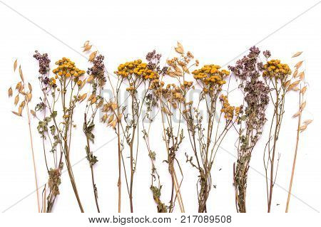 Flat lay dry branches of tansy and heather on a white background. Calluna vulgaris and Tanacetum view from above. Medical herb.