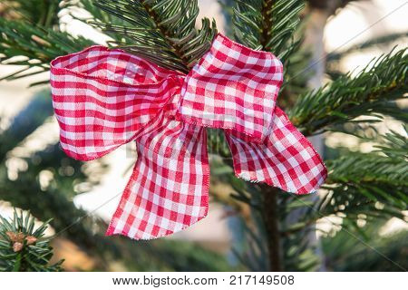 red and white checked bow at a christmas tree