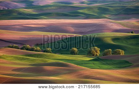 Sunlit rolling hills in the Palouse region of Washington State America from Steptoe Butte