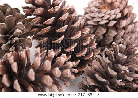 Abstract Macro of Pine Cones Isolated, Close up view of Pine Cones for textures, Pine one Background, Pine Cone Textures, For Designers