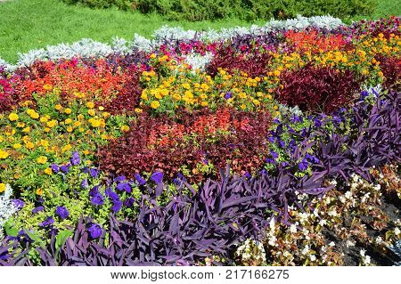 Fall Plants for Flower Bed. Colorful garden flowerbed in autumn. Flower Bed Landscape Design. Fall Flowerbed Gardening.