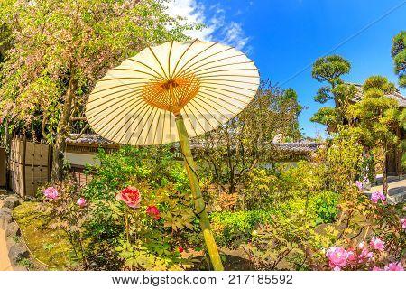Kamakura, Japan - April 23, 2017: Japanese big paper umbrella in Buddhist Hase-dera temple with garden background. Hase-dera, Kamakura, Japan. Japanese culture concept. Oriental background.